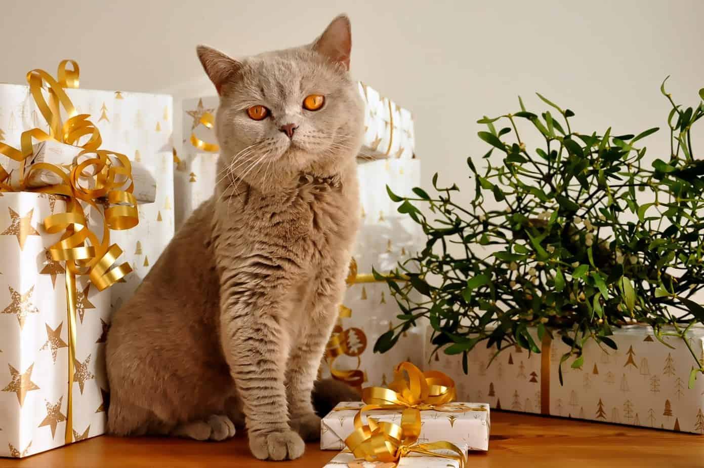 cat 1106804 1920
