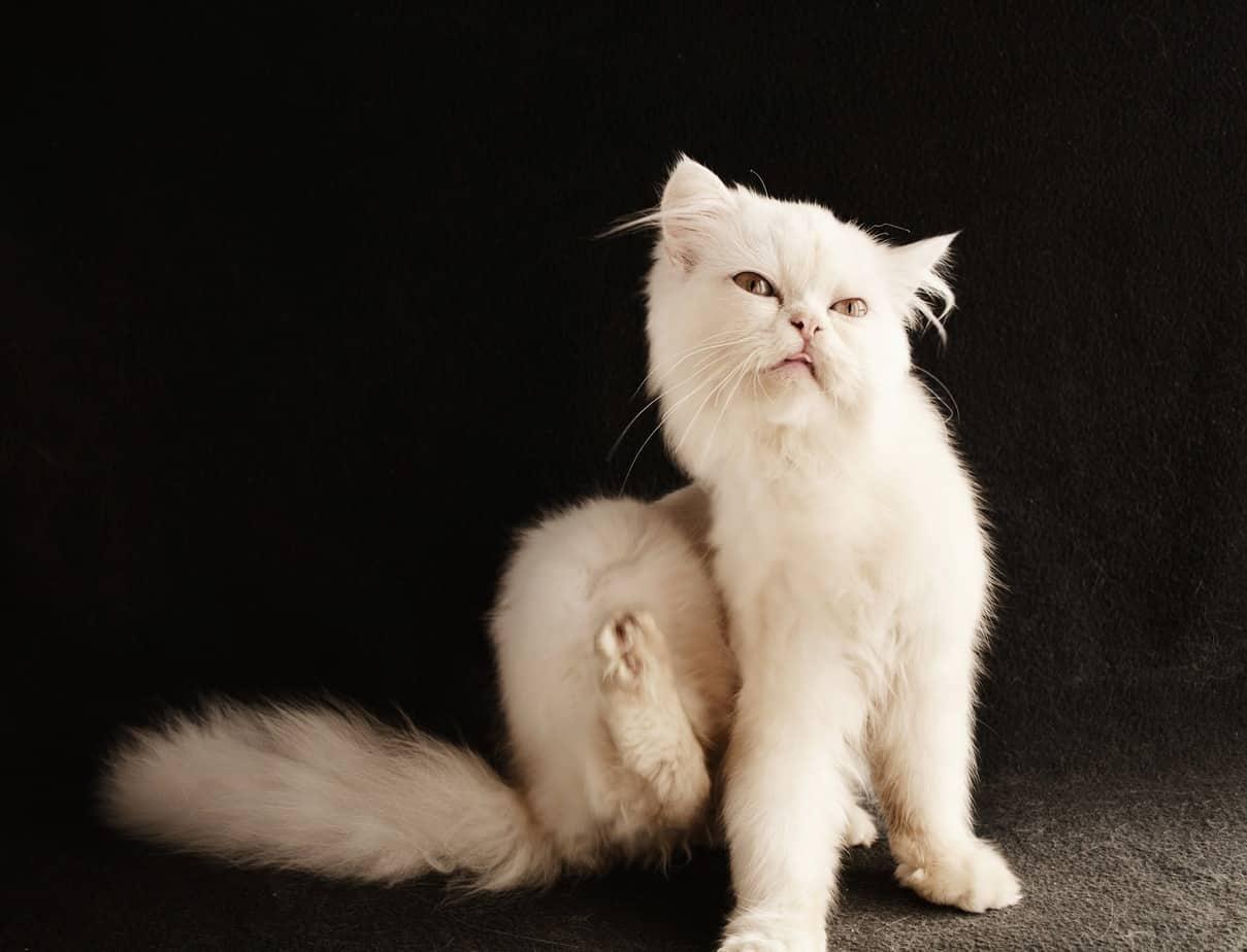 cat 3177585 1920