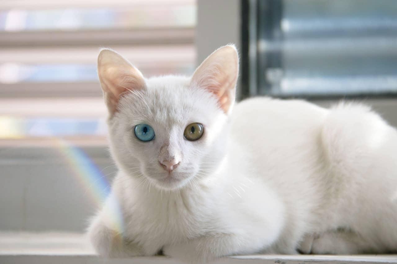 cat 1092371 1280