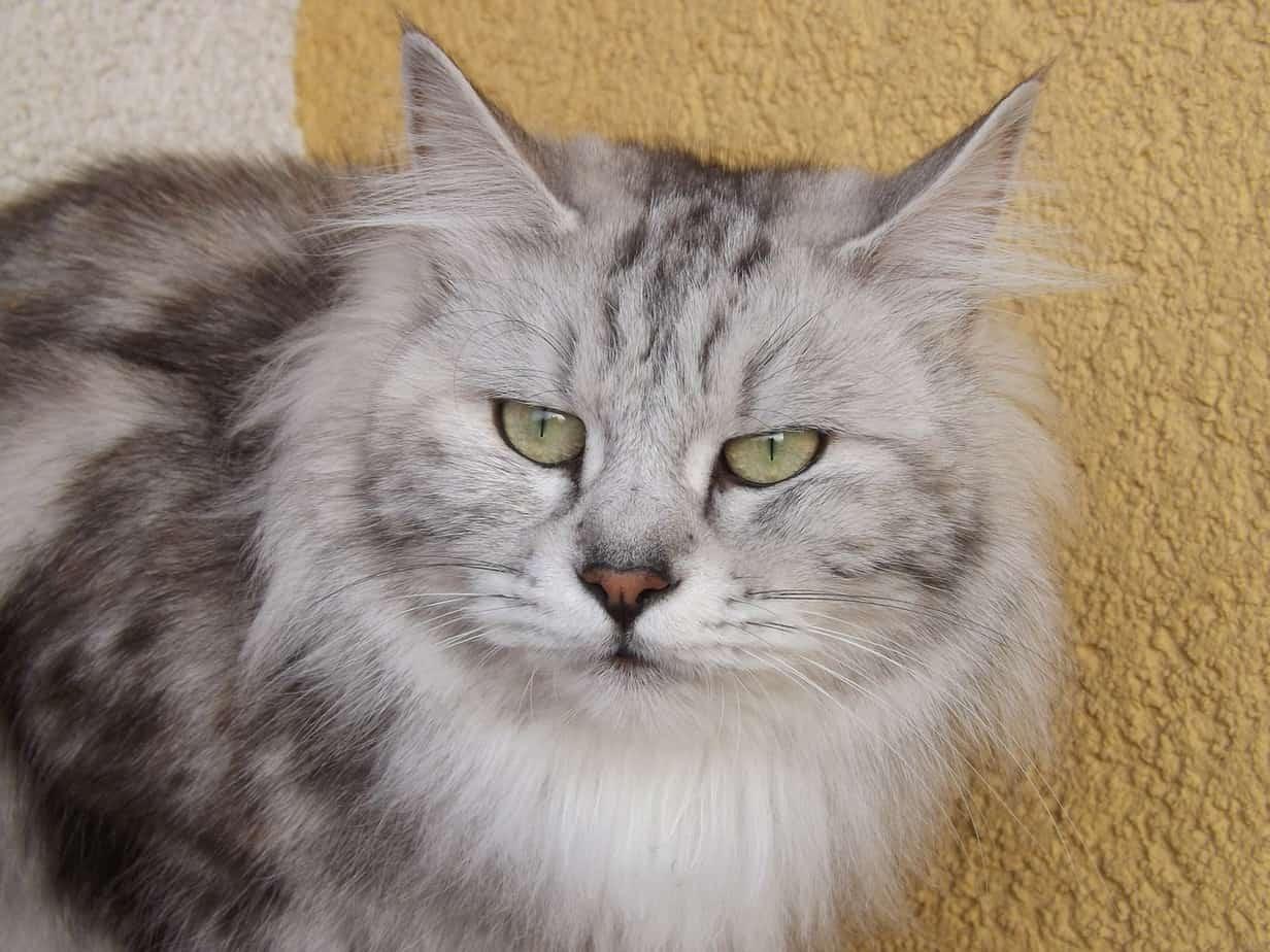 cat 284173 1280