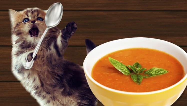 ac cat soup comp