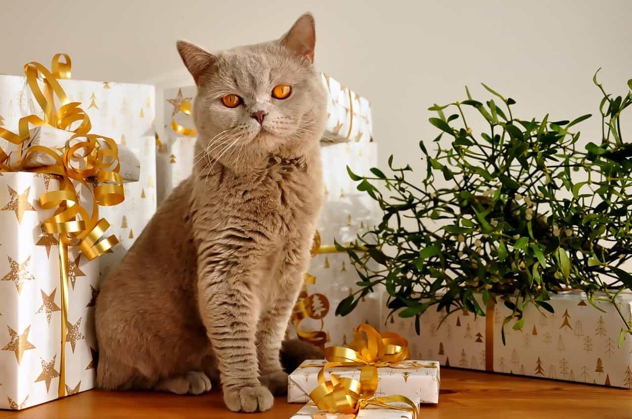cat 1106804 1280 1