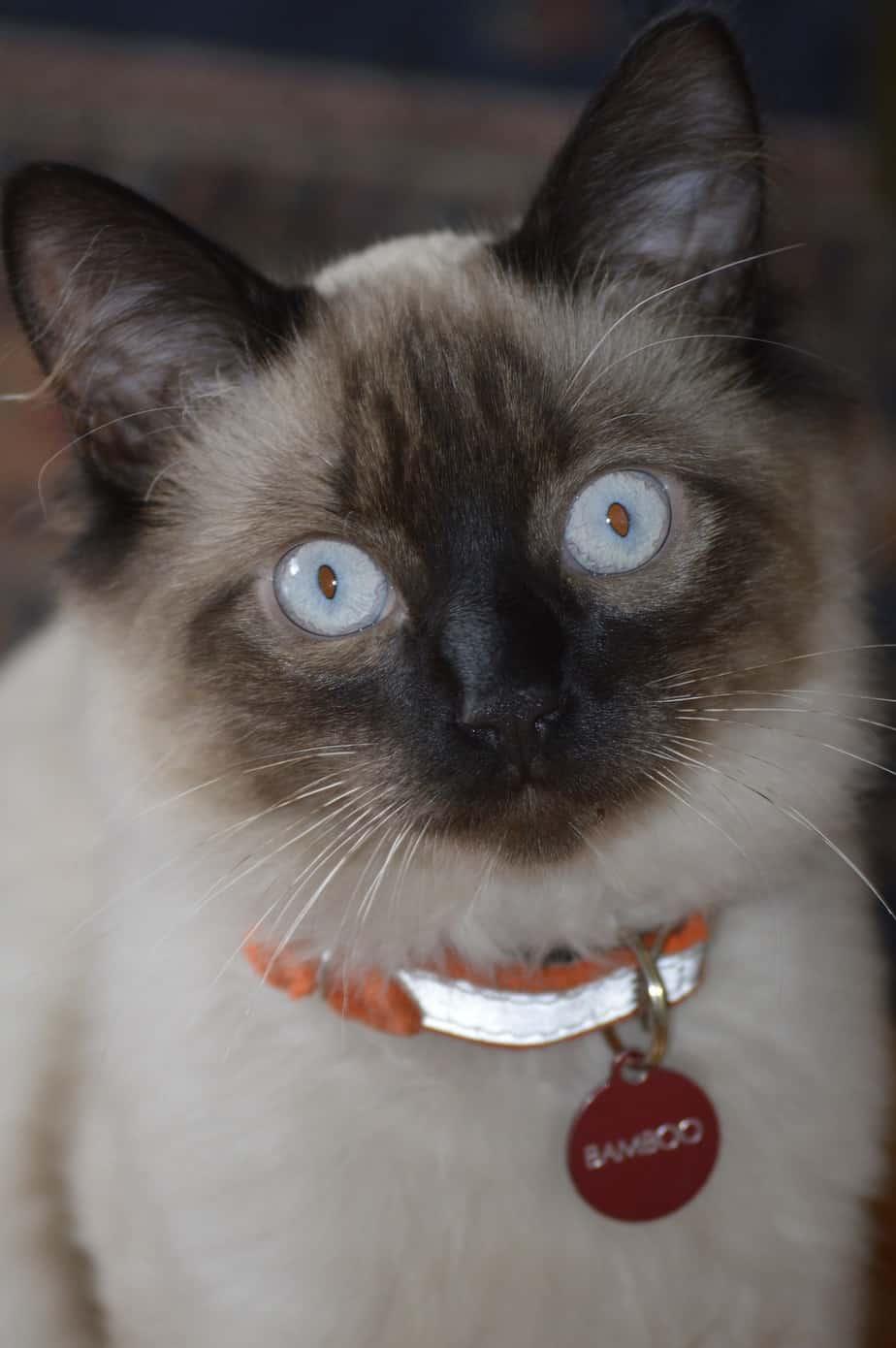cat 1501854 1920