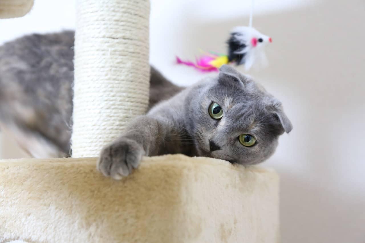cat 1684255 1280