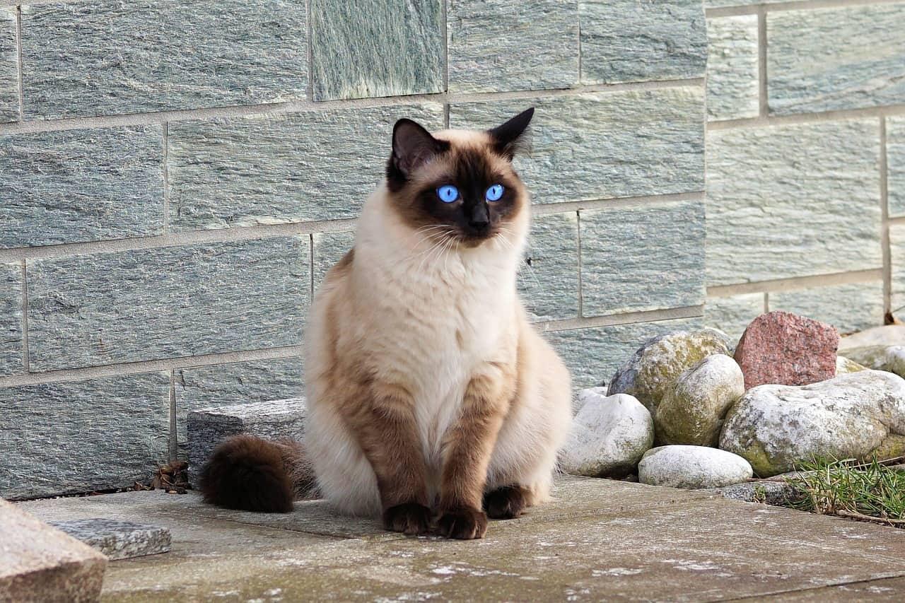 cat 2120915 1280