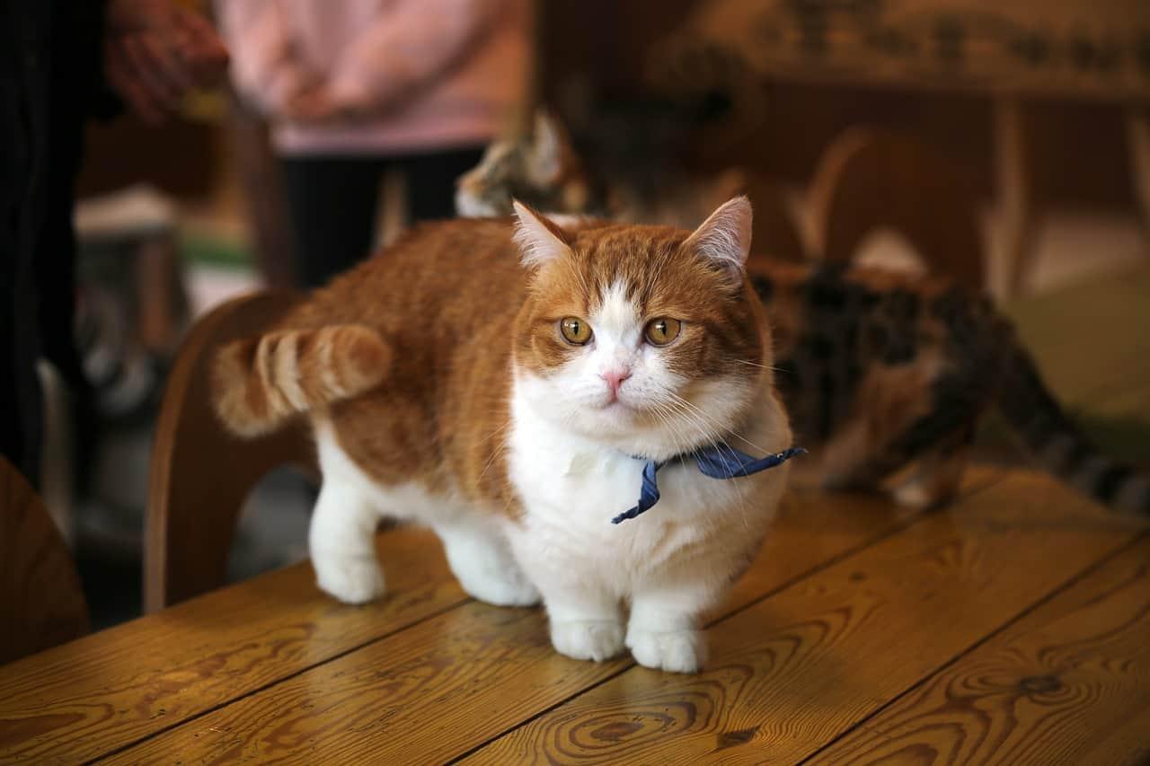 cat 2227906 1280