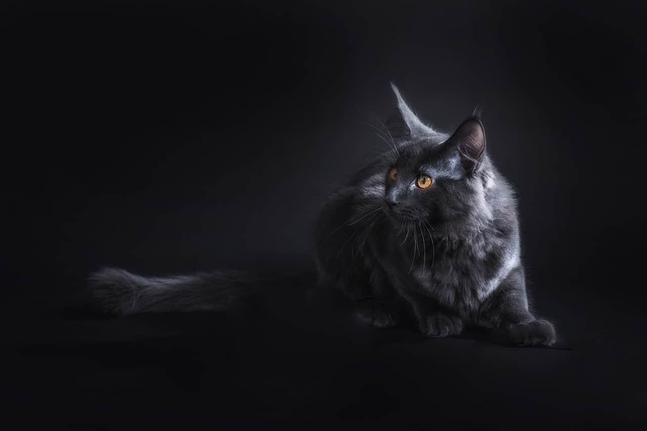 cat 2963057 1280