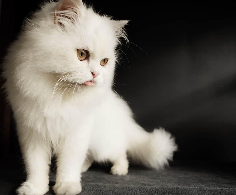 cat 3197421 1280 1
