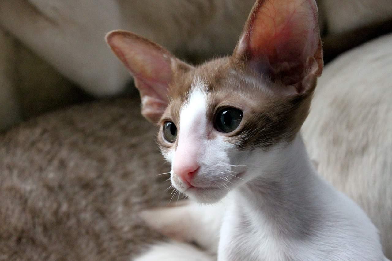 cat 408699 1280
