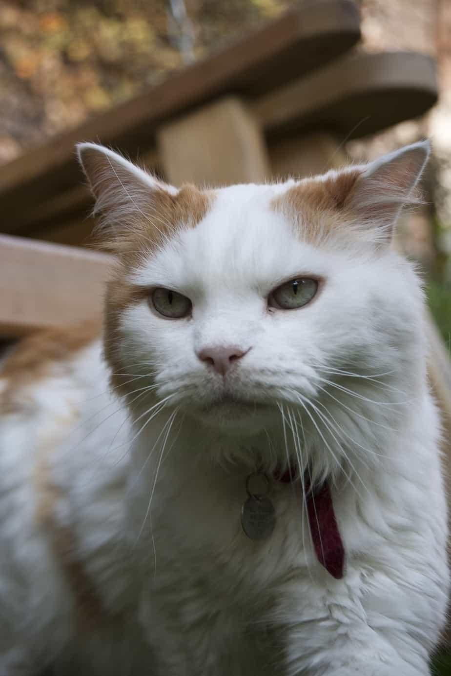 cat 439105 1920