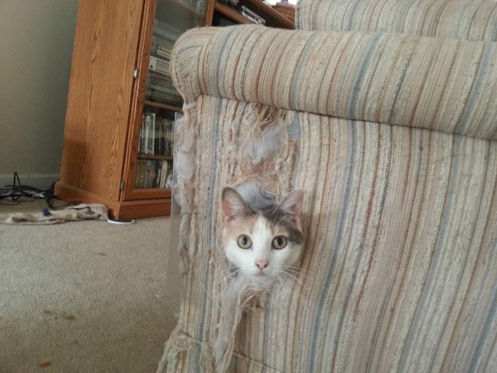 cat kills couch