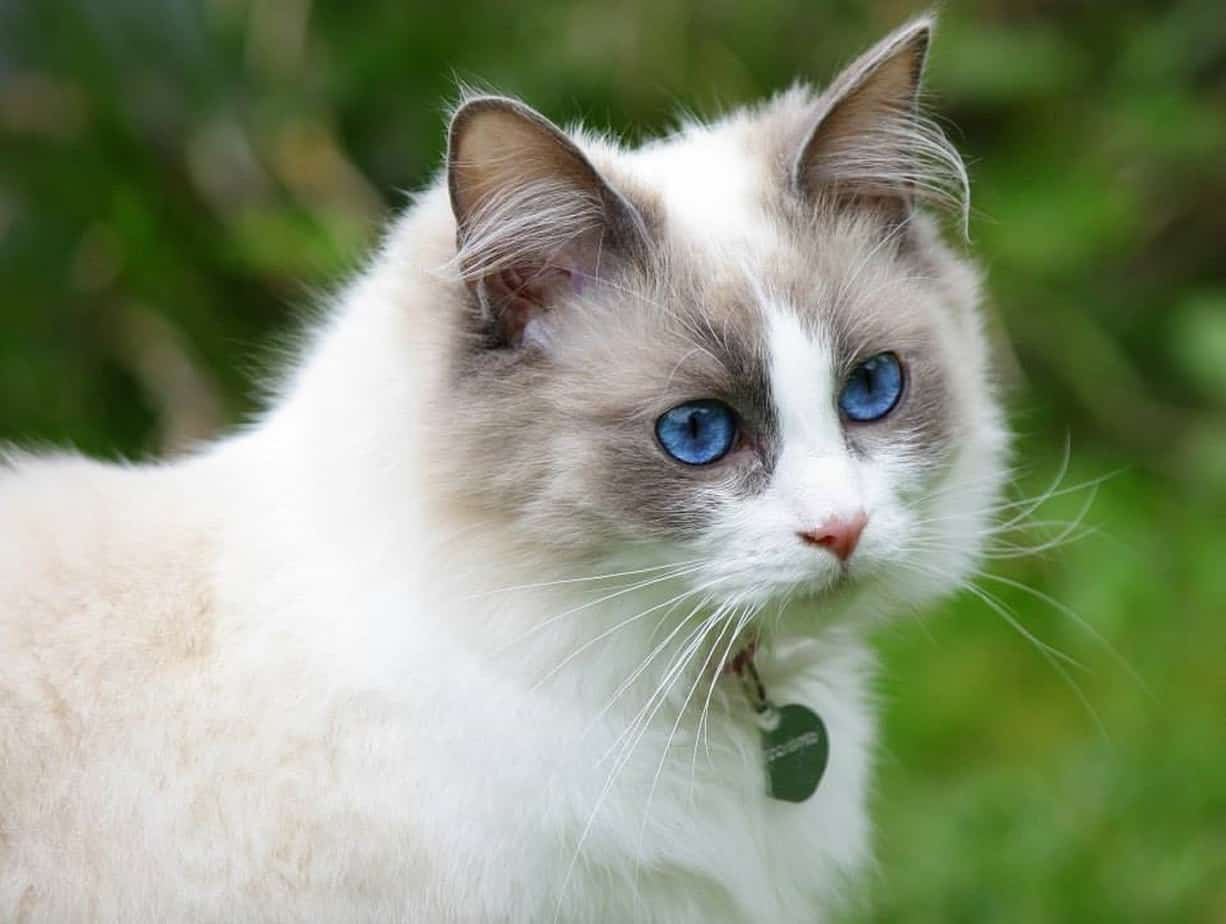 cat pretty 2126692 1280 1