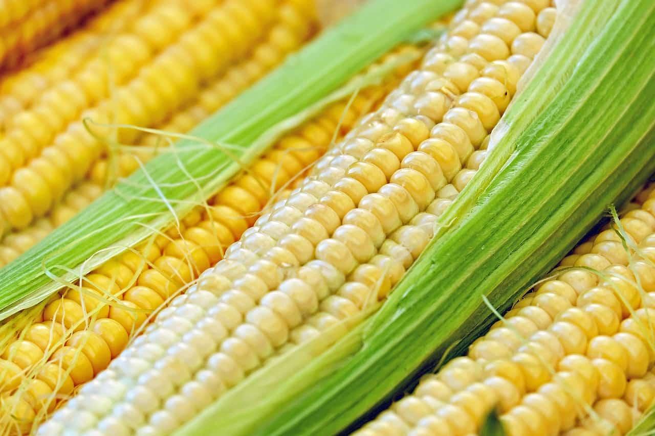 corn 1605664 1280