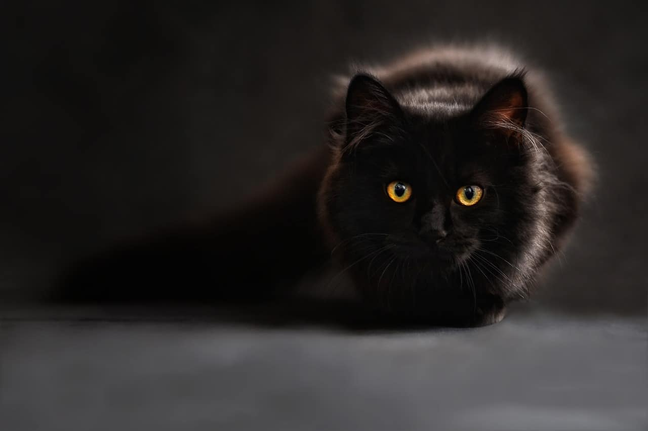 featured image black cat