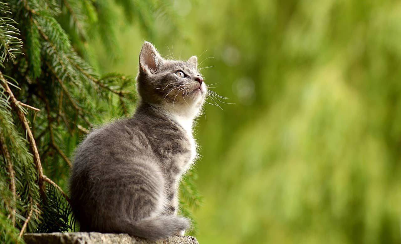 featured image cat breed