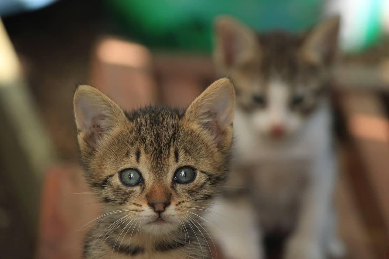 featured image cute cat breed