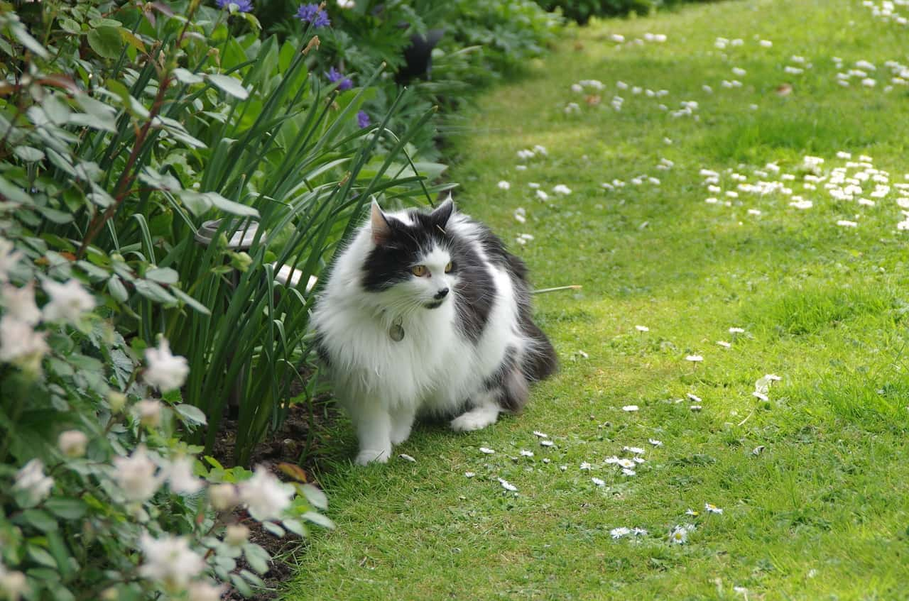 featured image for plants and cats