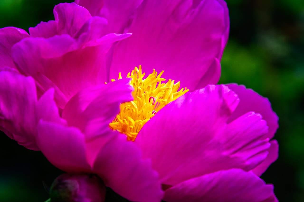 flower 3418850 1280