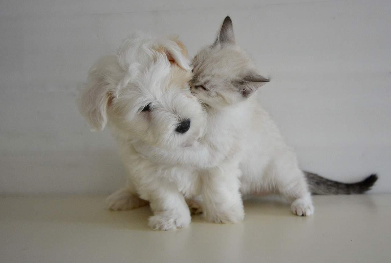 kiss 2728106 1280