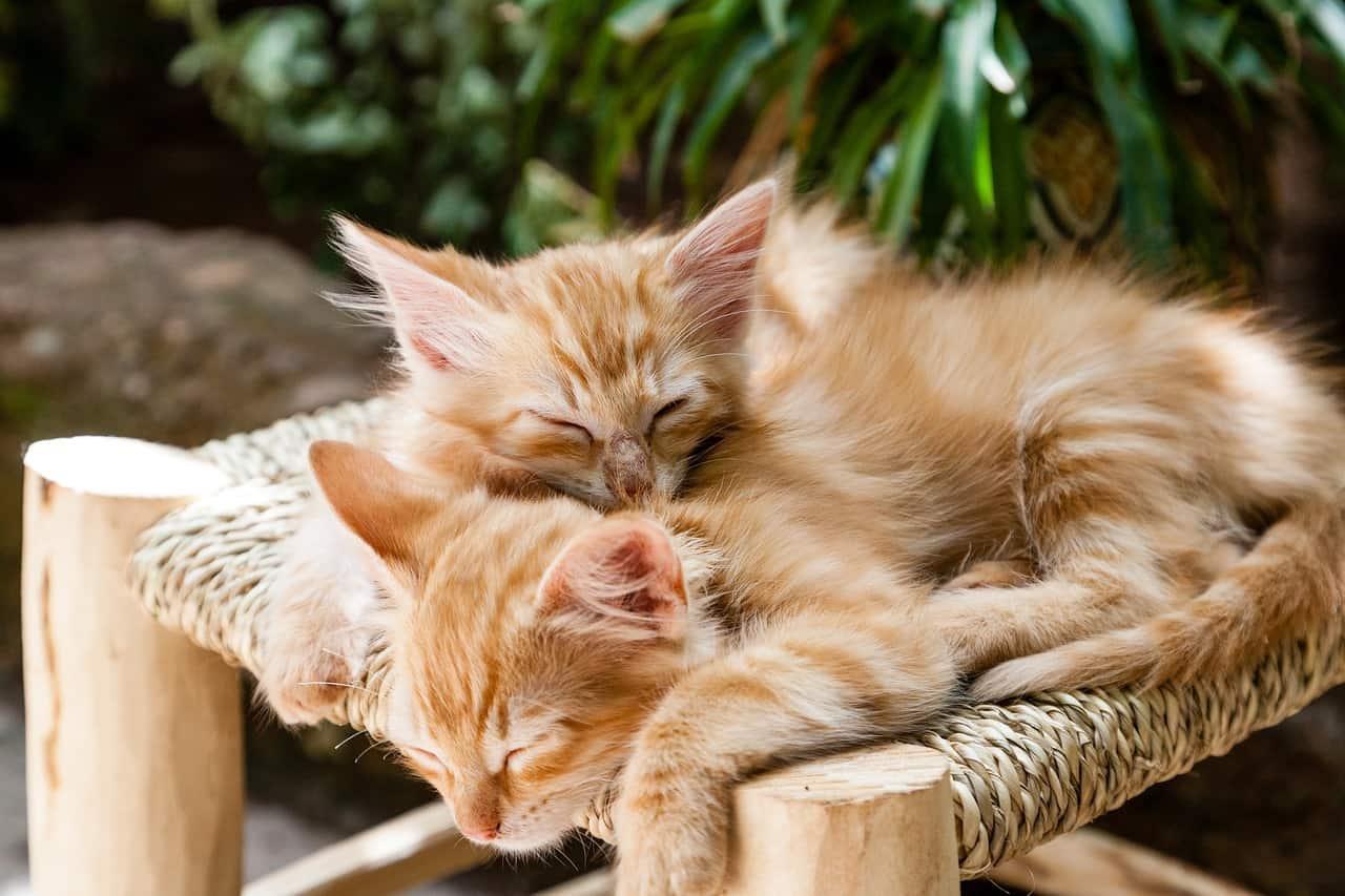 kittens 1916542 1280