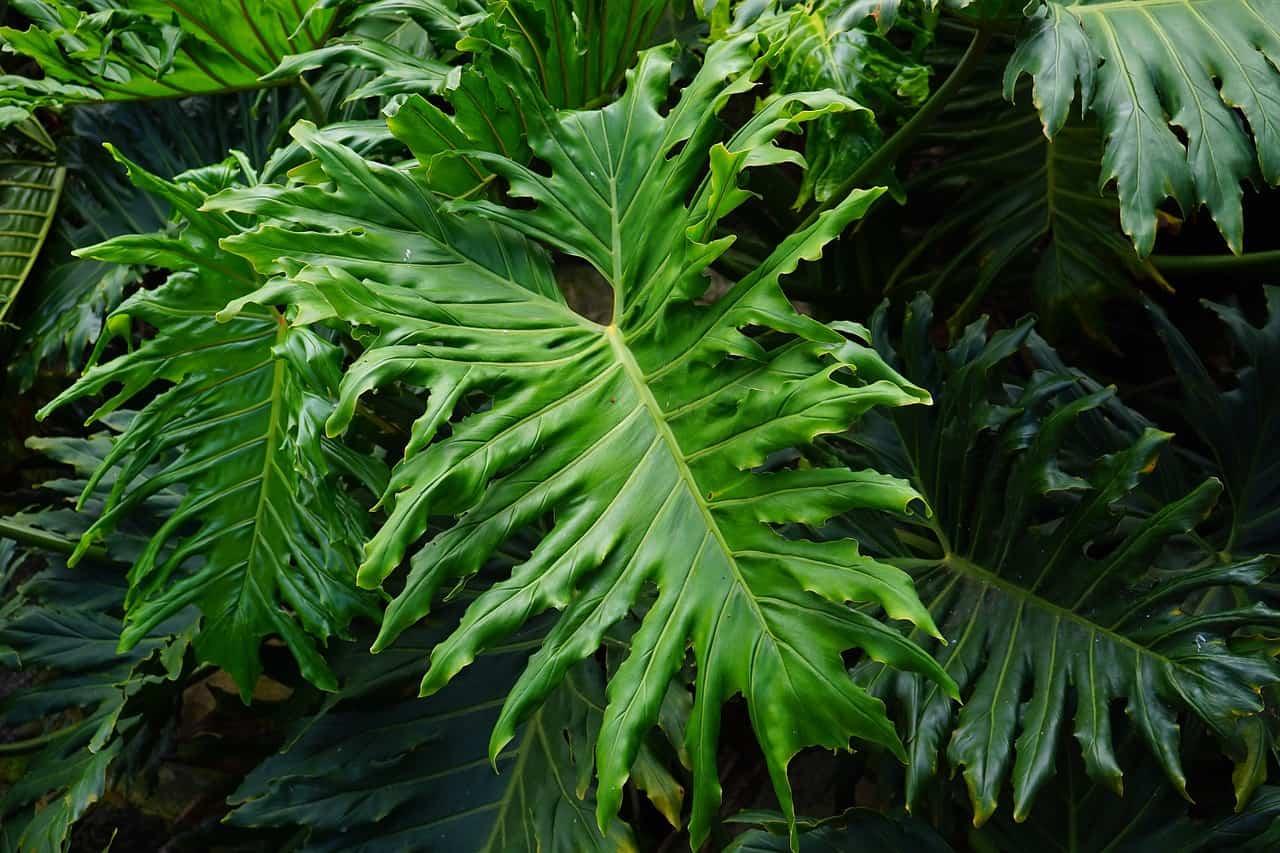 leaves 375610 1280