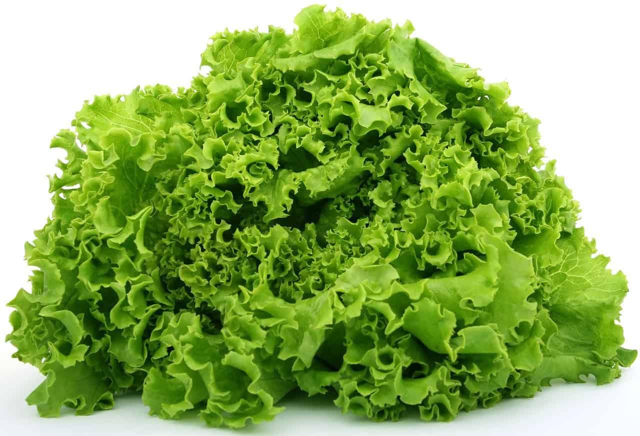 lettuce 1239155 1280
