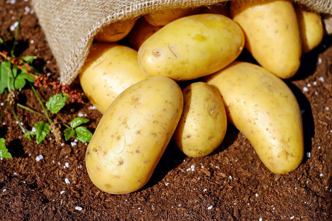 potatoes 1585075 1280
