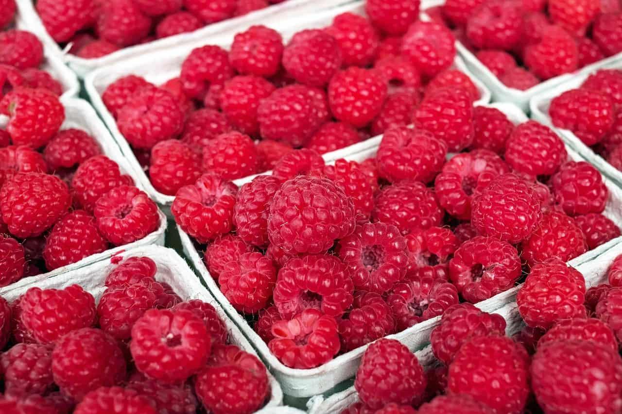 raspberry 1465988 1280
