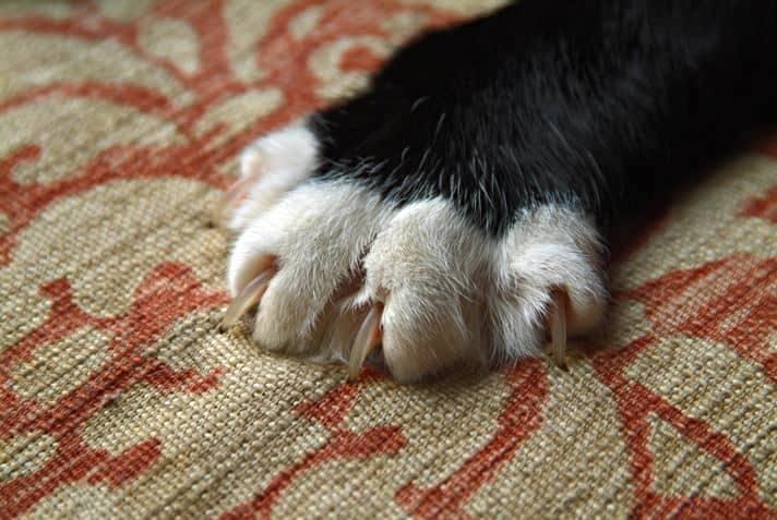 solution scratching adult cat Dec RR SB LC