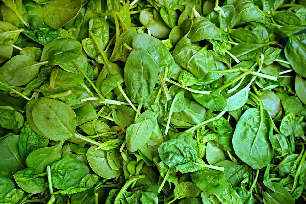 spinach 1522283 1280