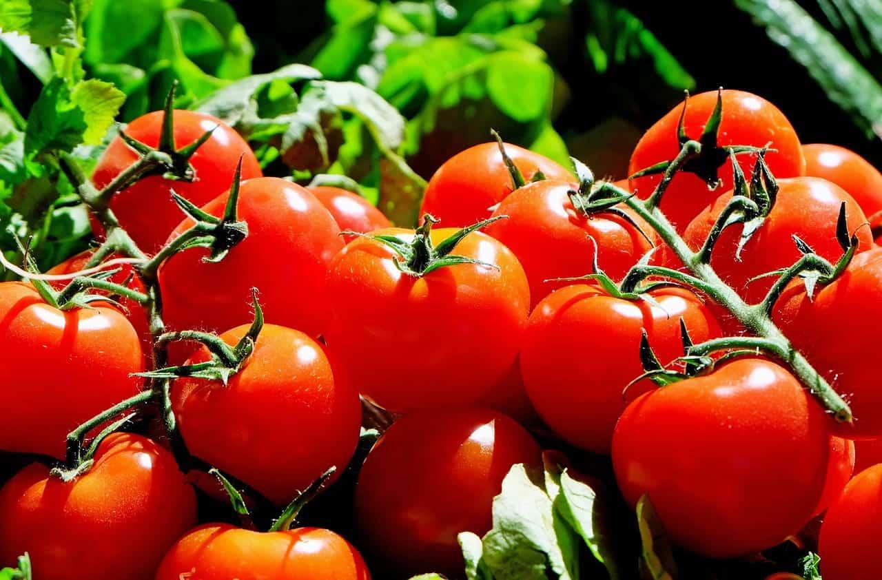 tomatoes 1280859 1280