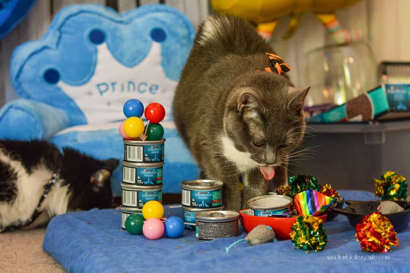 Wet cat food is perfect for a cat birthday party