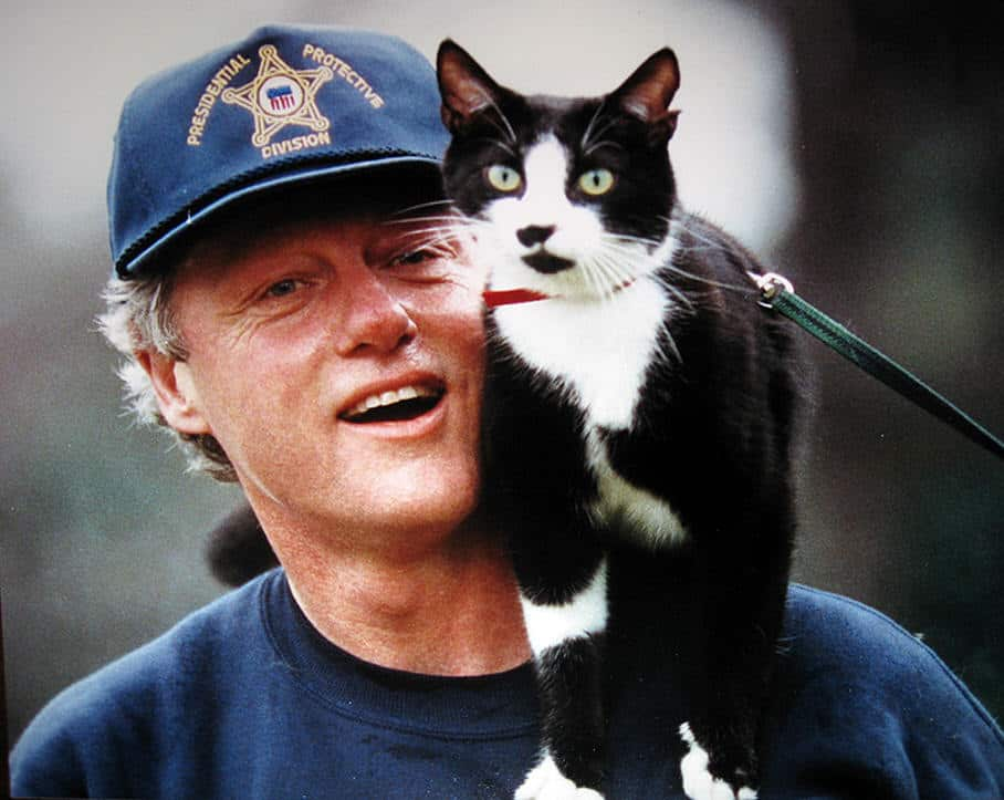 bill clinton favorite cat socks photo 1