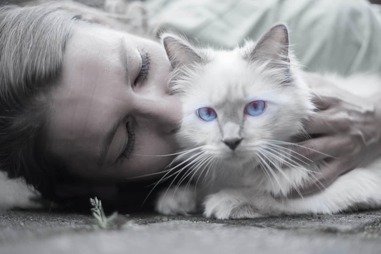 cat 1423844 1280