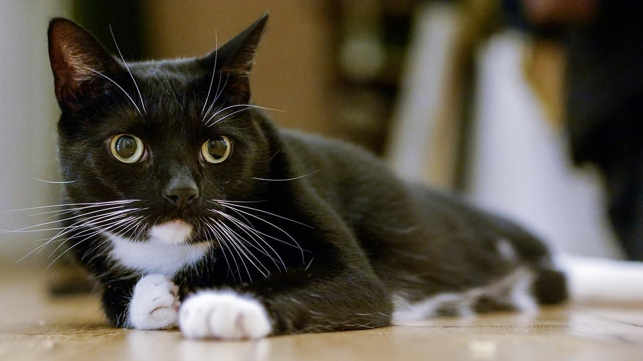 cat 2066415 1280