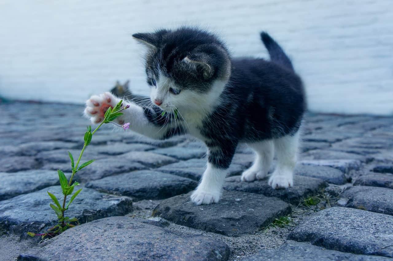 cat 2536662 1280