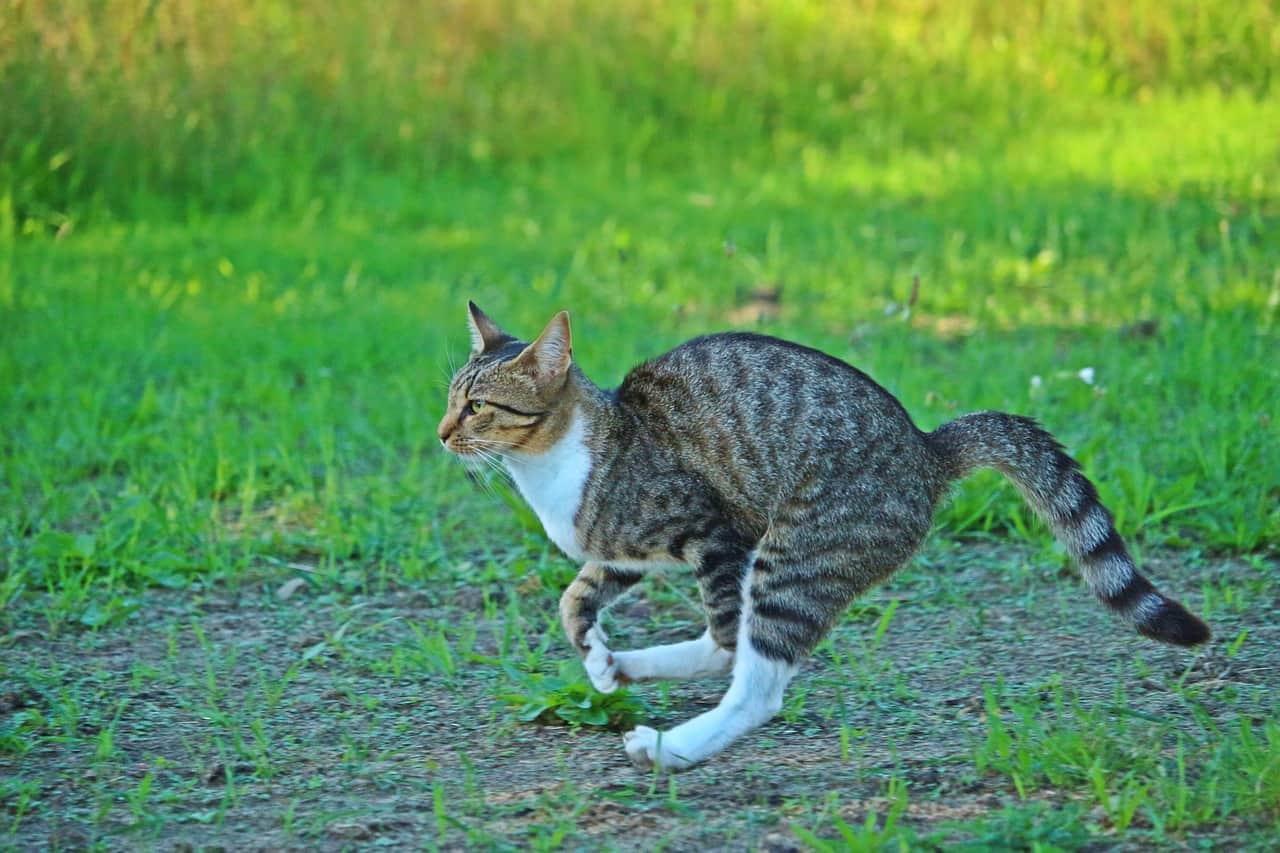 cat 2615731 1280
