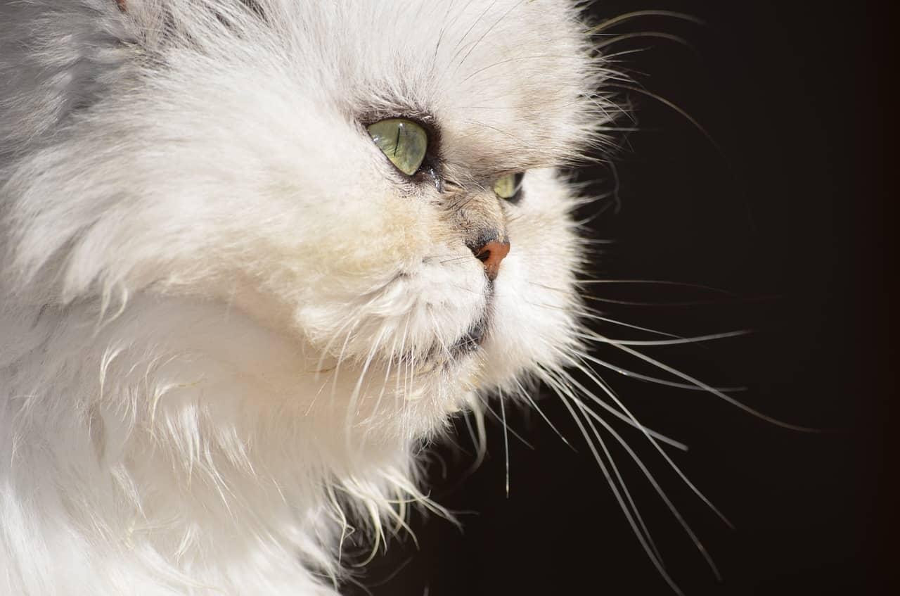 cat 2865025 1280