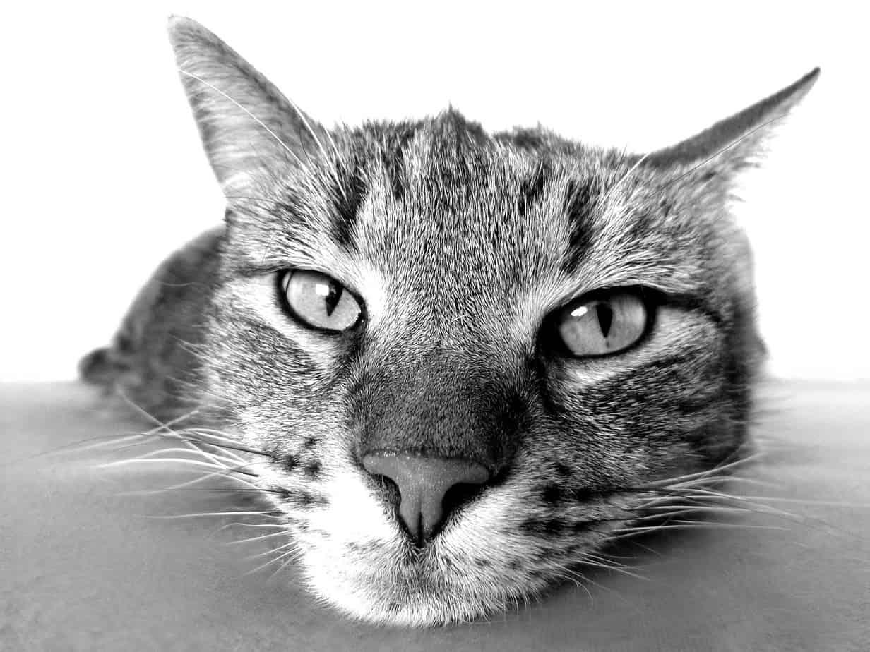 cat 98359 1280