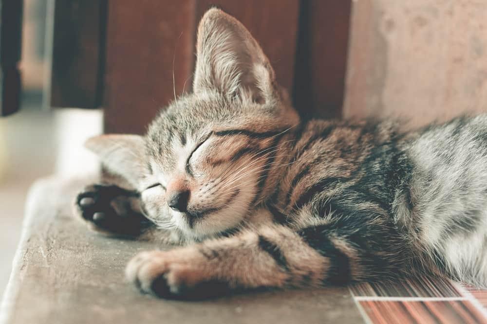 adorable animal animal photography 1056251