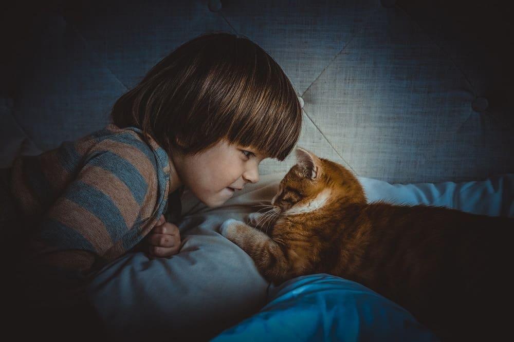 cat 1045180 1280 1