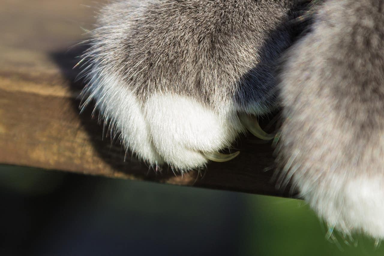 cat 1136361 1280