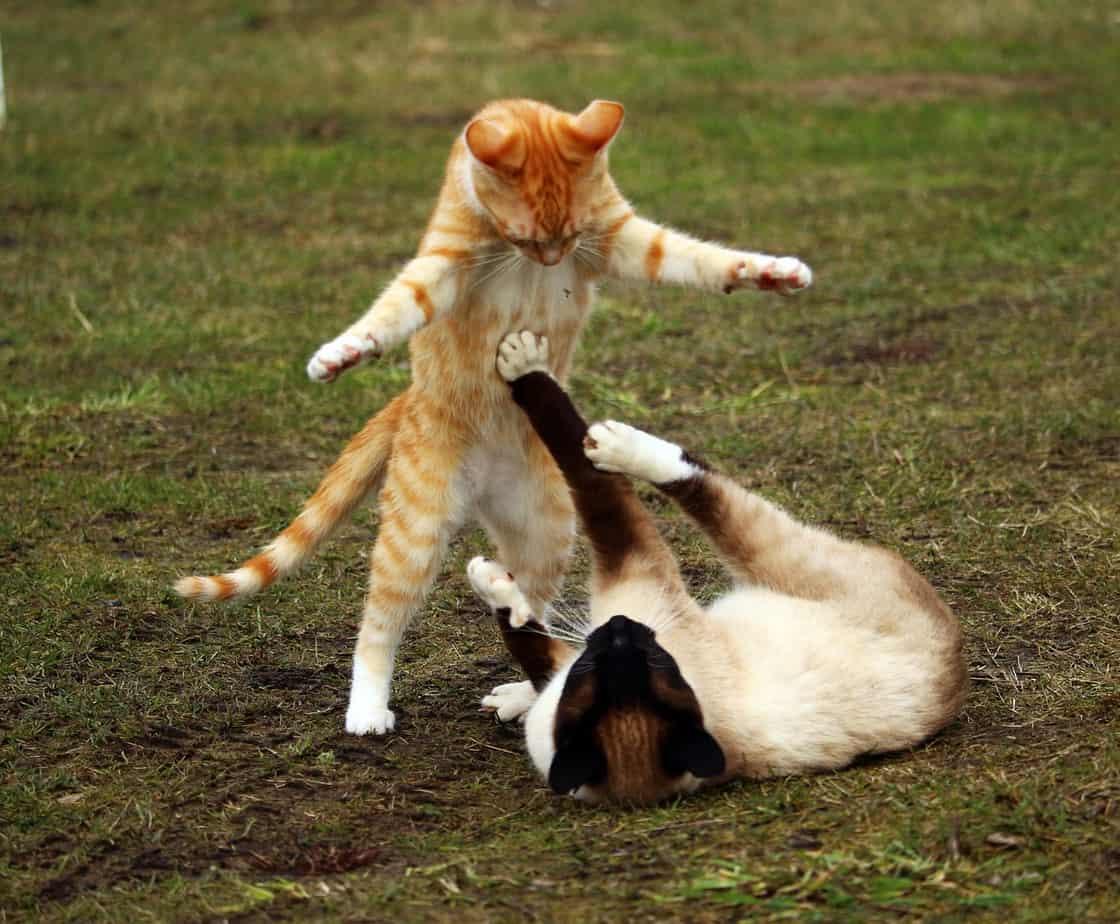 cat 1234950 1280