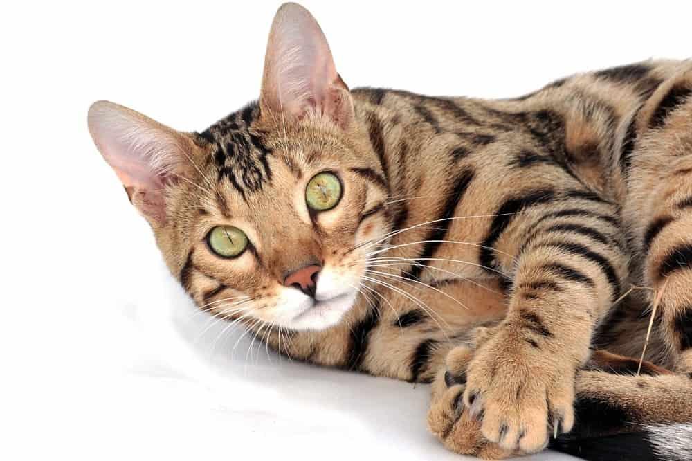 cat 2048416 1280