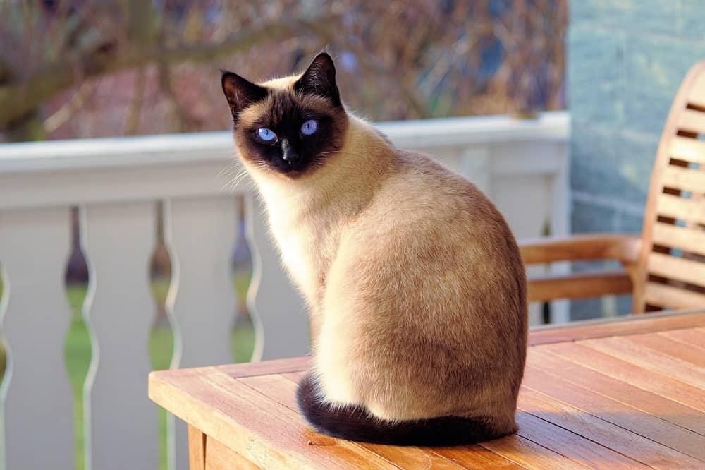 cat 2068462 1280