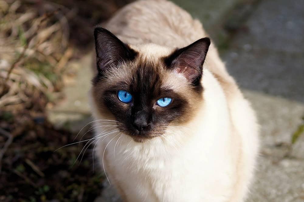 cat 2124270 1280
