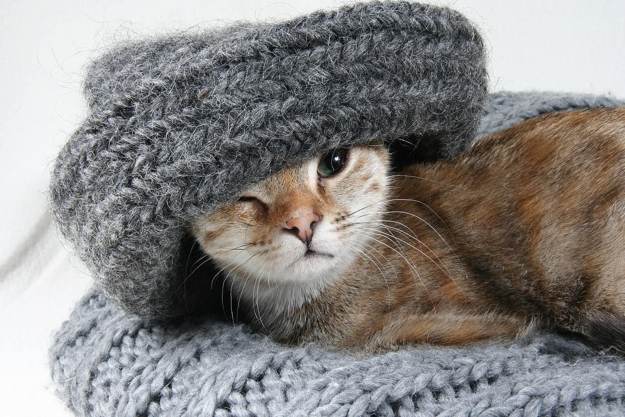 cat 2201460 1280
