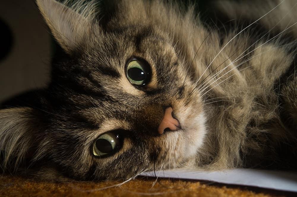 cat 2309138 1280
