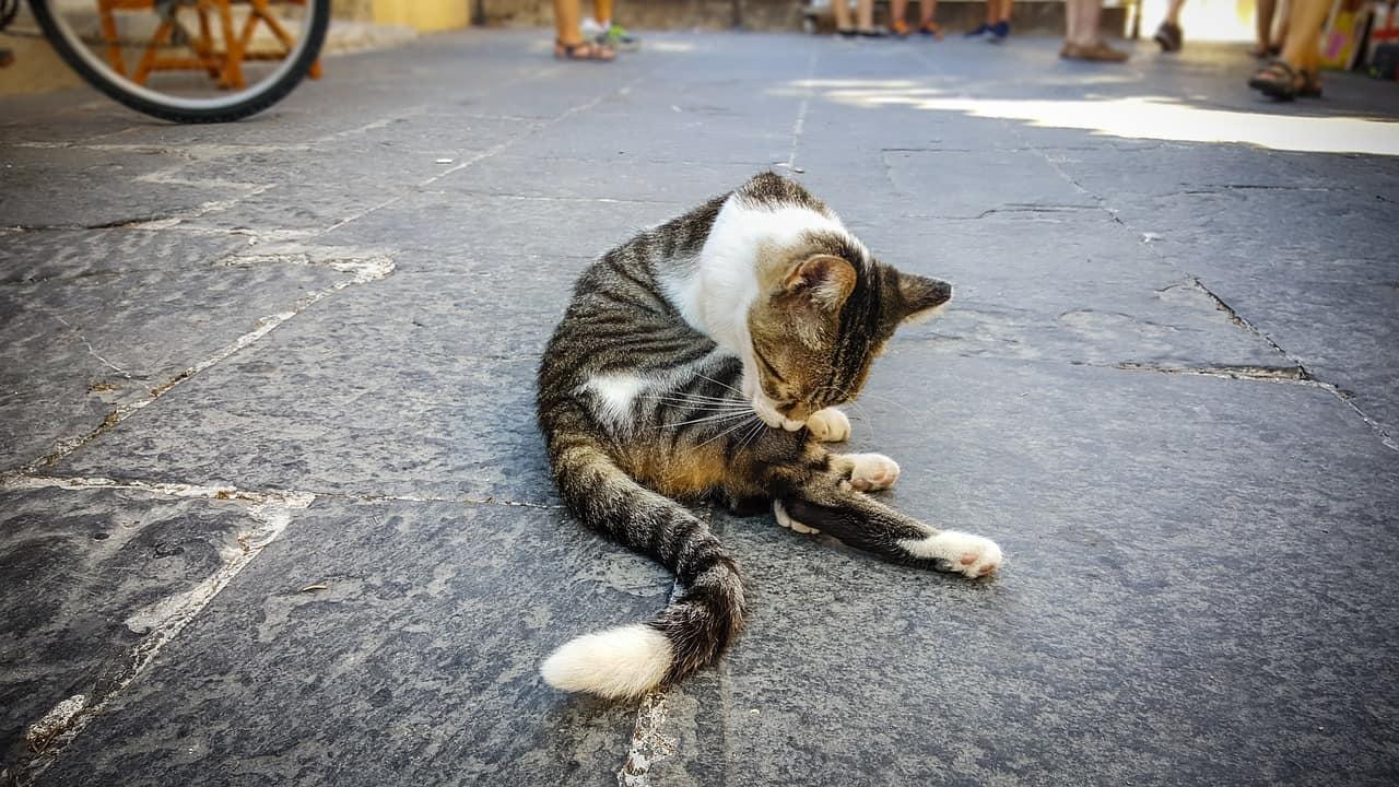 cat 2410329 1280