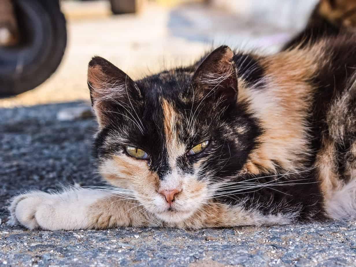 cat 2439040 1280